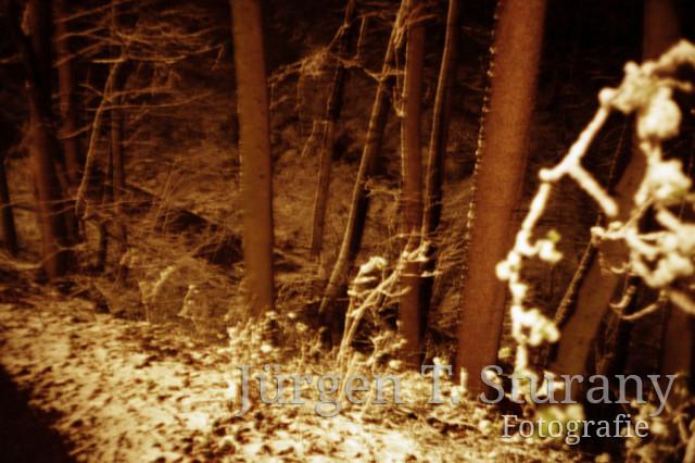 Nachtwald 1, 1991