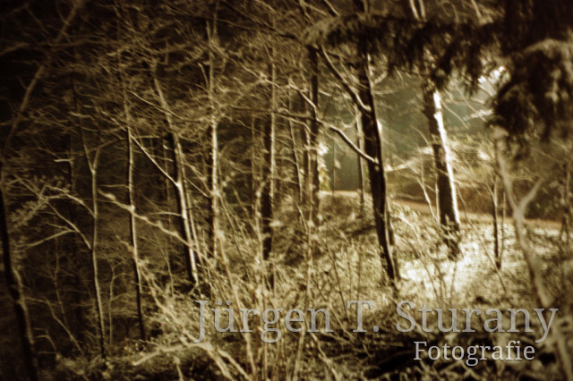 Nachtwald 2, 1991