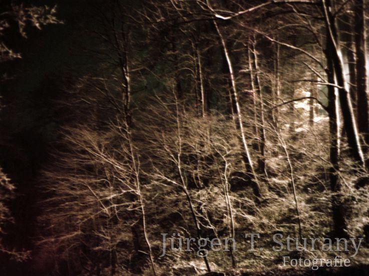 Nachtwald 3, 1991