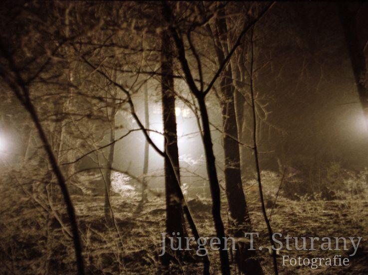 Nachtwald 4, 1991