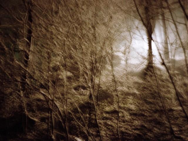 Nachtwald 5, 1991