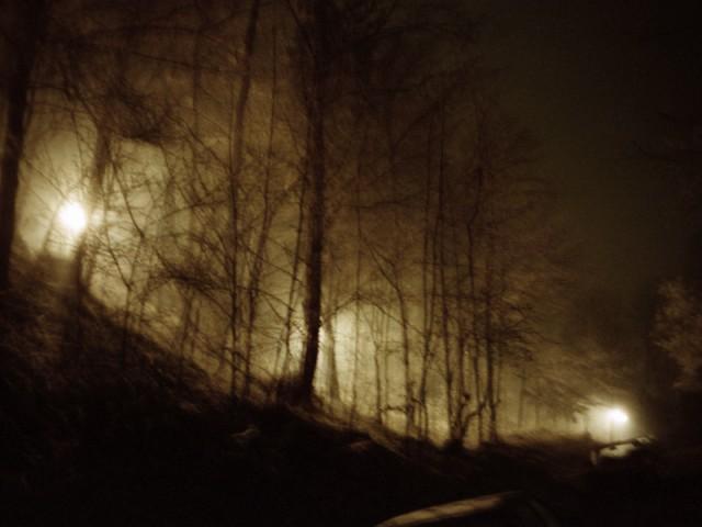 Nachtwald 6, 1991