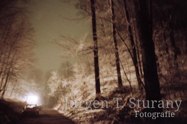 Nachtwald 7, 1991